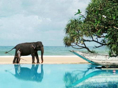 Красивый пейзаж в Шри-Ланке