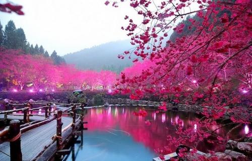 Красивый вид в Корее