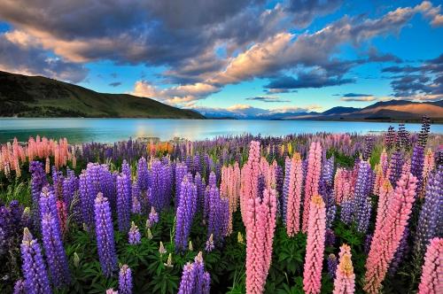 Красивый вид в Новой Зеландии