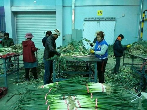 Работа на ферме в Корее