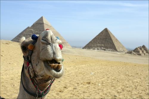 Египет: пирамиды и верблюд